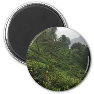 Tea Plantation Magnet