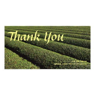 Tea Plantation Thank You Photo Card