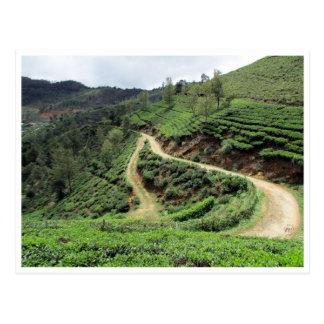 tea plantation trails postcard