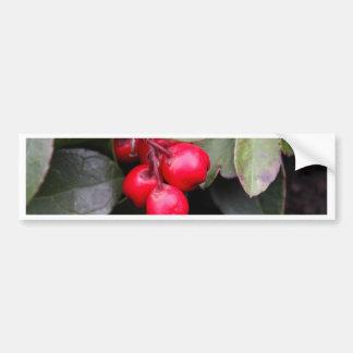Teaberry Gaultheria procumbens Bumper Sticker