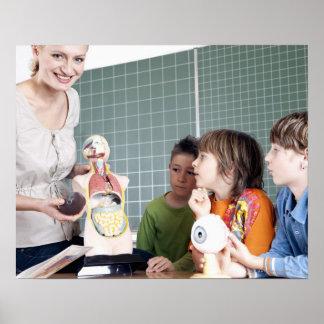 teacher demonstrating model of human body to poster