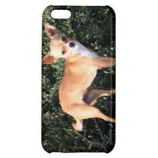 Teacup Chihuahua Puppy iPhone 5C Case