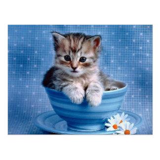 Teacup Kitten Postcard