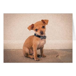 Teacup Puppy Card