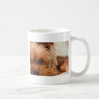 teacup yorkie puppy coffee mug