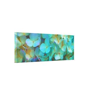 Teal blue  Hydrangea Canvas Print