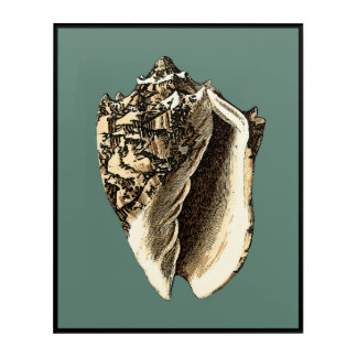Teal Conch Shell Acrylic Wall Art