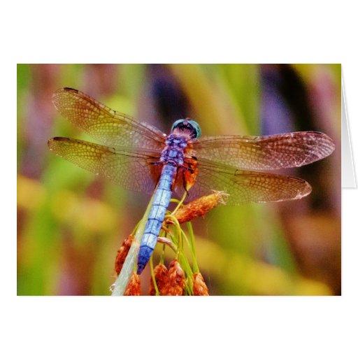 Teal Dragonfly on sedge Card