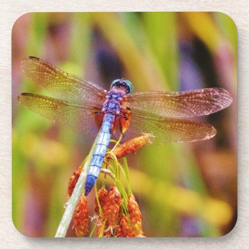Teal Dragonfly on sedge Beverage Coaster