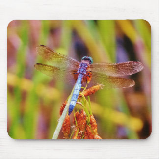 Teal Dragonfly on sedge Mouse Pad