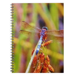 Teal Dragonfly on sedge Notebook