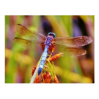 Teal Dragonfly on sedge Postcard