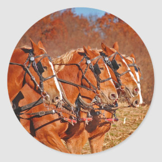 Team of Horses in Field Classic Round Sticker
