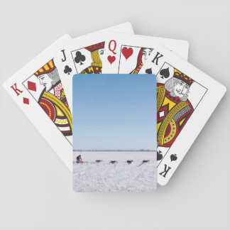Team Themed, A Team Of Strong Husky Dogs Pulls A S Poker Deck