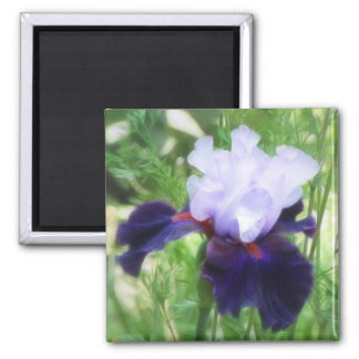 Teamwork - Tall Bearded Iris Magnet