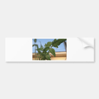 TEAR DROP BUMPER STICKER