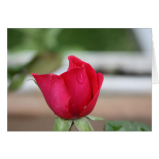 Tear of a Rosebud Card
