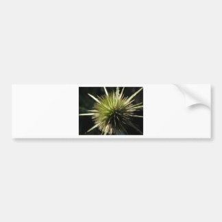 Teasel on display bumper sticker