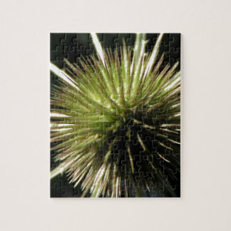 Teasel on display jigsaw puzzle