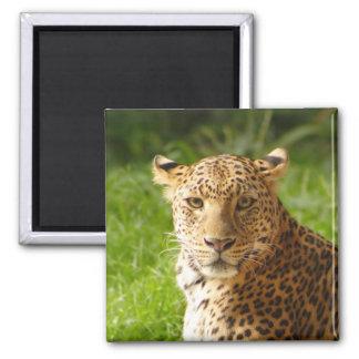 TecBoy.net Magnet - Leopard