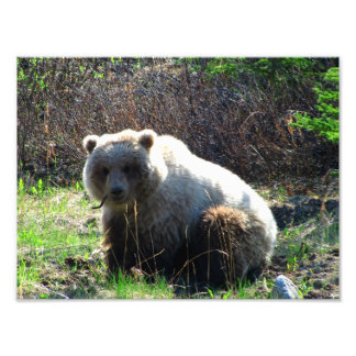 Teddy Bear's Picnic Photo Print