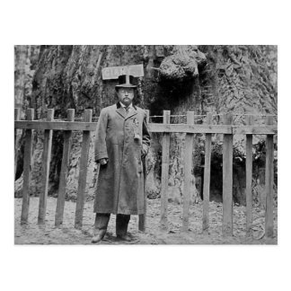Teddy Roosevelt at the Big Tree Grove Santa Cruz Postcard