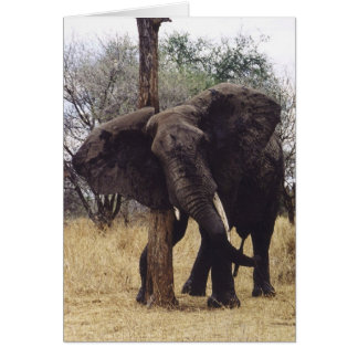 Tembo (Elephant) Scratching Card