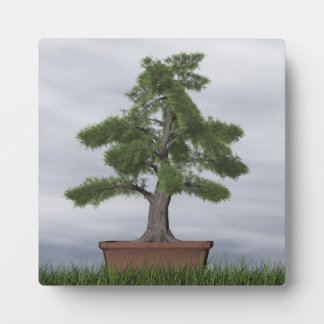 Temple juniper tree bonsai - 3D render Plaque