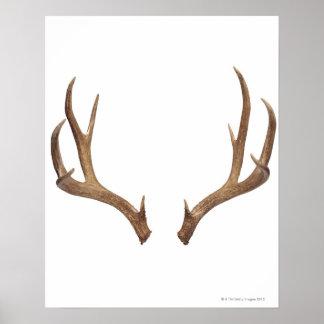 Ten Point Deer Poster