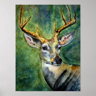 Ten Pointer (Deer) Fine Art Prints