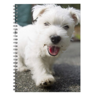 Ten week old female west highland terrier note books
