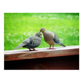 Tender Lovebirds Kiss Postcard