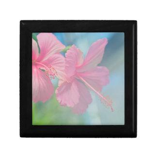 Tender macro shoot of pink hibiscus flowers gift box