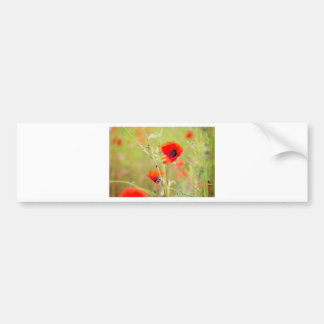 Tender shot of red poppies on the field bumper sticker