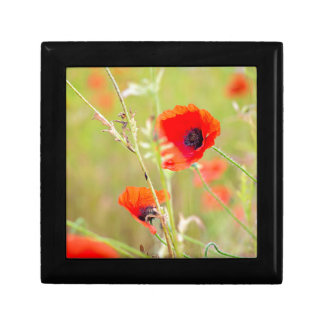 Tender shot of red poppies on the field gift box