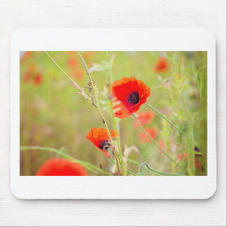 Tender shot of red poppies on the field mouse pad