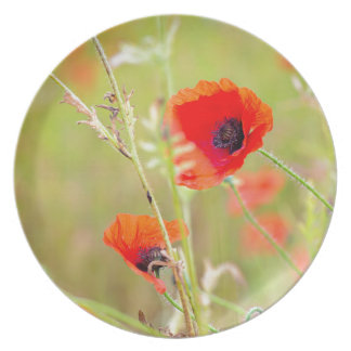 Tender shot of red poppies on the field plate