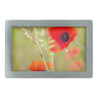 Tender shot of red poppies on the field rectangular belt buckle