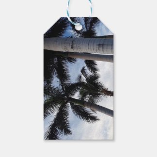 Tenerife Palm Trees Gift Tag