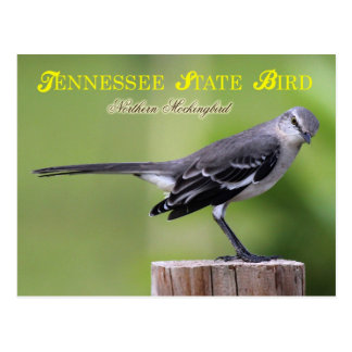Tennessee State Bird - Northern Mockingbird Postcard