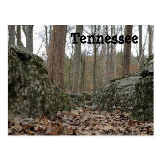 Tennessee Trees Postcard