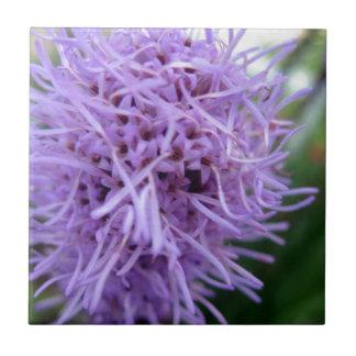 Tentacle Spider Violet Flower Tile