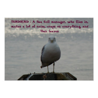 TERDBIRD : A Sea Gull manager, who fl... Poster