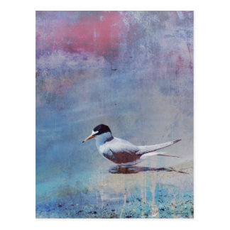 Tern by the Shore Postcard