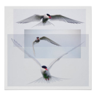 Tern Collection Poster
