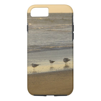 Tern Gulls Birds Beach Ocean Sunrise iPhone 8/7 Case