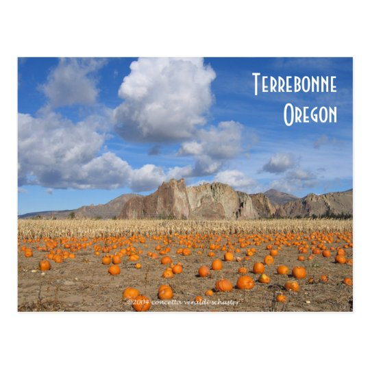Terrebonne Pumpkins Postcard