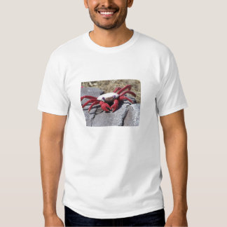 Terrible Twos shirt