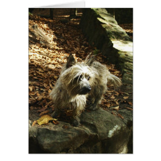 Terrier in Autumn Card