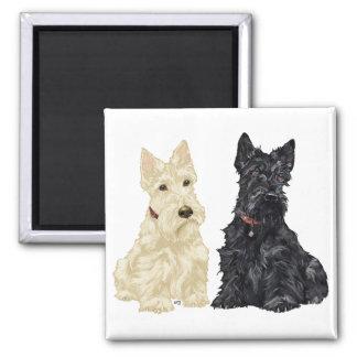 Terriers écossais blonds comme les blés et noirs magnet carré